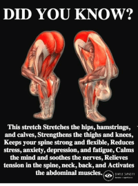 Memes, Anxiety, and Depression: DID YOU KNOW?  This stretch Stretches the hips, hamstrings,  and calves, Strengthens the thighs and knees  Keeps your spine strong and flexible, Reduces  stress, anxiety, depression, and fatigue, Calms  the mind and soothes the nerves, Relieves  tension in the spine, neck, back, and Activates  the abdominal muscles. Simple Capacity