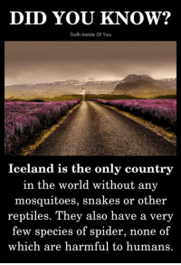 Memes, Spider, and Iceland: DID YOU KNOW?  Truth Inside Of You  Iceland is the only country  in the world without any  mosquitoes, snakes or other  reptiles. They also have a very  few species of spider, none of  which are harmful to humans. On my way to Iceland..!! :P