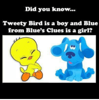 Blue's Clues, Memes, and Blue Clues: Did you know...  Tweety Bird is a boy and Blue  from Blue's clues is a girl