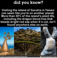 Reminds me of Dr. Seuss 🌳 awesome islands travel yemen cool 📢 Share the knowledge! Tag your friends in the comments. ➖➖➖➖➖➖➖➖➖➖➖ Want more Did You Know(s)? ➡📓 Buy our book on Amazon: [LINK IN BIO] ➡📱 Download our App: http:-apple.co-2i9iX0u ➡📩 Get daily text message alerts: http:-Fact-Snacks.com ➡📩 Free email newsletter: http:-DidYouKnowFacts.com-Sign-Up- ➖➖➖➖➖➖➖➖➖➖➖ We post different content across our channels. Follow us so you don't miss out! 📍http:-facebook.com-didyouknowblog 📍http:-twitter.com-didyouknowfacts ➖➖➖➖➖➖➖➖➖➖➖ DYN FACTS TRIVIA TIL DIDYOUKNOW NOWIKNOW: did you know?  Visiting the island of Socotra in Yemen  can seem like you're on another planet.  More than 30% of the island's plant life,  including the dragon blood tree that  bleeds bright red sap when it's cut, isn't  found anywhere else on earth  PHOTO: SOCOTRA.RU/DARKROASTEDBLEND  DIDYOUKNOWBLOG.COM Reminds me of Dr. Seuss 🌳 awesome islands travel yemen cool 📢 Share the knowledge! Tag your friends in the comments. ➖➖➖➖➖➖➖➖➖➖➖ Want more Did You Know(s)? ➡📓 Buy our book on Amazon: [LINK IN BIO] ➡📱 Download our App: http:-apple.co-2i9iX0u ➡📩 Get daily text message alerts: http:-Fact-Snacks.com ➡📩 Free email newsletter: http:-DidYouKnowFacts.com-Sign-Up- ➖➖➖➖➖➖➖➖➖➖➖ We post different content across our channels. Follow us so you don't miss out! 📍http:-facebook.com-didyouknowblog 📍http:-twitter.com-didyouknowfacts ➖➖➖➖➖➖➖➖➖➖➖ DYN FACTS TRIVIA TIL DIDYOUKNOW NOWIKNOW