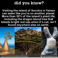 Bloods, Dank, and Life: did you know?  Visiting the island of Socotra in Yemen  can seem like you're on another planet  More than 30% of the island's plant life,  including the dragon blood tree that  bleeds bright red sap when it's cut, isn't  found anywhere else on earth.  DIDYOUKNOWBLOG.coM  PHOTO: SOCOTRA. RUIDARKROASTED BLEND These trees! 🌲  Source(s) on the Did You Know blog, below photo ➡️ http://didyouknowblog.com/post/149534115032/visiting-the-island-of-socotra-in-yemen-can-seem