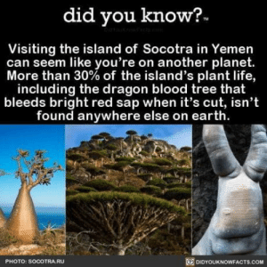 Wanne go there: did you know?  Visiting the island of Socotra in Yemen  can seem like you're on another planet.  More than 30% of the island's plant life,  including the dragon blood tree that  bleeds bright red sap when it's cut, isn't  found anywhere else on earth.  DIDYOUKNOWEACTS.COM  PHOTO: SOCOTRA.RU Wanne go there