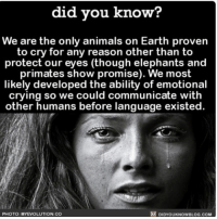 Memes, The More You Know, and Elephant: did you know?  We are the only animals on Earth proven  to cry for any reason other than to  protect our eyes (though elephants and  primates show promise). We most  likely developed the ability of emotional  crying so we could communicate with  other humans before language existed.  S PHOTO: MY EVOLUTION CO  DIDYOUKNOWBLOG.COM The more you know 😭💫 interesting crying human behavior animals ➡📱Download our free App: [LINK IN BIO]
