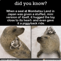 Memes, Seal, and Toys: did you know?  When a seal at Mombetsu Land in  Japan was given a stuffed, mini  version of itself, it hugged the toy  close to its heart- and even gave  it a piggyback ride.  DEDYOUKNowFACTS.coM  PHOTO: MOMBETSU LAND If this doesn't make you smile, I'm not sure what will. 😍 socute animals nature cute love ➡📱Download our free App: [LINK IN BIO]