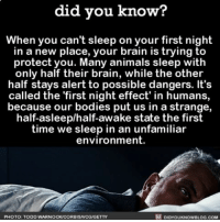 Amazon, Animals, and Bodies : did you know?  When you can't sleep on your first night  in a new place, your brain is trying to  protect you. Many animals sleep with  only half their brain, while the other  half stays alert to possible dangers. It's  called the first night effect in humans,  because our bodies put us in a strange,  half asleep/half-awake state the first  time we sleep in an unfamiliar  environment  DIDYOUKNOWBLOG.coM  PHOTO: TODD WARNOCK/CORBIS  NCG/GETTY This is definitely a thing. 👀 sleep sleeping brain ➡️📓 Buy our book on Amazon: [LINK IN BIO]