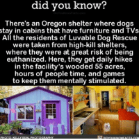 Memes, Furniture, and Oregon: did you know?  you There's an Oregon shelter where dogs  stay in cabins that have furniture and TVs  All the residents of Luvable Dog Rescue  were taken from high-kill shelters,  where they were at great risk of being  euthanized. Here, they get daily hikes  in the facility's wooded 55 acres,  hours of people time, and games  to keep them mentally stimulated  PHOTO: KELLY BEAL PHOTOGRAPHY YAS!!!! 💯 dogsofinsta dogs doglovers adoptdontshop ➡📱Download our free App: [LINK IN BIO]