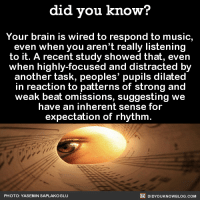 Dank, Wired, and 🤖: did you know?  Your brain is wired to respond to music,  even when you aren't really listening  to it. A recent study showed that, even  when highly-focused and distracted by  another task, peoples' pupils dilated  in reaction to patterns of strong and  weak beat omissions, suggesting we  have an inherent sense for  expectation of rhythm  DIDYOUKNOWBLOG.coM  PHOTO: YASEMIN SAPLAKOGLU What would life be without music? 🎼  Want more Did You Know(s)? ➡ 📓 Buy our book on Amazon: http://amzn.to/2eNRlj1 ➡📱 Get text message alerts: http://fact-snacks.com ➡ 📩  Free email newsletter: http://goo.gl/iRFFE7