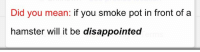 Disappointed, Tumblr, and Blog: Did you mean: if you smoke pot in front of a  hamster will it be disappointed sneakyeel:  As