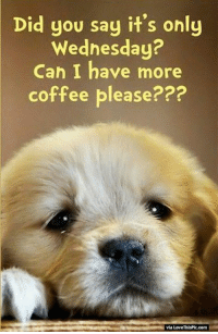 Can i've a more coffee plz :): Did you say it's only  Wednesday?  Can I have more  coffee please???  via Love ThisPic.com Can i've a more coffee plz :)