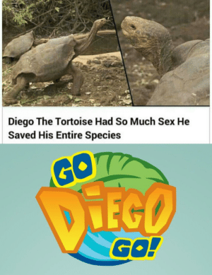 Diego is my spirit animal: Diego The Tortoise Had So Much Sex He  Saved His Entire Species  GO7  DIEGO  GO! Diego is my spirit animal