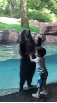 "Animals, Cute, and Fucking: diekingdomcome:  64bitwar:  shinhito: So fucking cute. the bear just agrees to start jumping with him like ""alright yeah let's do that""   Animals are awesome"