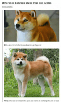 Difference between Shiba Inus and Akitas  thecouchwitch  Shiba Inu: Smol but enthusiastic anime protagonist  Li  Akita: Wise old forest spirit the gives out wishes in exchange for gifts of food Smol Doge vs. Big Doge