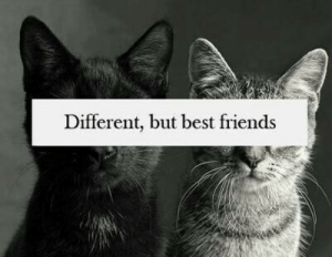 Friends, Best, and Best Friends: Different, but best friends