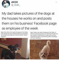 Well they do deserve it: dill2ill  @ illdill  My dad takes pictures of the dogs at  the houses he works on and posts  them on his business' Facebook page  as employee of the week  Meet Frida. She is this week's Employee of the Week, Meet Tucker, this week's Employee of the Week. In  even though she was constantly biting my shoelaces, between chasing squirrels, and admiing himself in his  and trying to persuade me to let her outside. Sweet, new sweater, he found time to supervise me while I  sweet girl.  removed two layers of old flooring, before installing a  new floor. Good boy! Well they do deserve it