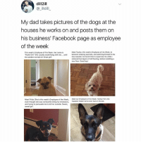 SWIPE & TAG ❤️ follow me @v.cute.animals 👈👈: dill2ill  @ illdill  My dad takes pictures of the dogs at the  houses he works on and posts them on  his business' Facebook page as employee  of the weelk  This week's Employee of the Week. Her name is  Meet Tucker, this week's Employee of the Week. In  Paulie Grl She usually would hang with me....unt  the sanders turned on! Great gir  btween chasing squirrels, and admiring himself in his  new sweater, he found time to supervise me while I  removed two layers of old flooring, before installing a  new floor. Good boy  Meet Frida. She is this week's Employee of the Week,  Meet our Employee of the Week: Harleyt He's the  tantly biting my shoelaces, happiest helper we've ever had on the job.  and trying to persuade me to let her outside. Sweet,  sweet girl SWIPE & TAG ❤️ follow me @v.cute.animals 👈👈