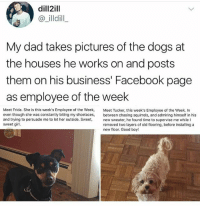 Dad, Dogs, and Facebook: dill2ill  @_illdill  My dad takes pictures of the dogs at  the houses he works on and posts  them on his business' Facebook page  as employee of the week  Meet Frida. She is this week's Employee of the Week, Met Tucker, this week's Employee of the Week. In  even though she was constantly biting my shoelaces, between chasing squirrels, and admiring himself in his  and trying to persuade me to let her outside. Sweet, new sweater, he found time to supervise me while I  sweet girl.  removed two layers of old flooring, before installing a  new floor. Good boy! Seems similar to what I do on behavior consultations.... (@funpawcare) Go to my website www.funpawcare.com for free expert cat and dog training, behavior, nutrition and pet care articles and sign up for our newsletter and blog, link in bio. All social media pages are current and listed on website dogtraining training ethology aba appliedbehavior positivereinforcement nutrition canine canines puppylove anthrozoology neurobiology doglover puppies puppy pupper puppers puppiesofinstagram dogstagram perro adopt rescue volunteer adoptdontshop foster dogs dog vegan pet pets