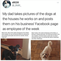 Dad, Dank, and Dogs: dill2ill  @illdill  My dad takes pictures of the dogs at  the houses he works on and posts  them on his business' Facebook page  as employee of the week  Meet Frida. She is this week's Employee of the Week, Meet Tucker, this week's Employee of the Week. In  even though she was constantly biting my shoelaces, between chasing squirrels, and admiring himself in his  and trying to persuade me to let her outside. Sweet,new sweater, he found time to supervise me while I  sweet girl.  removed two layers of old flooring, before installing a  new floor. Good boy