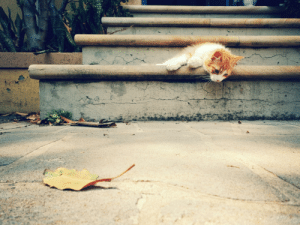 Dings first adventure outside. He hunted a leaf, caught a leaf, ate a leaf, heaved a leaf, had leaf chasing ennui...: Dings first adventure outside. He hunted a leaf, caught a leaf, ate a leaf, heaved a leaf, had leaf chasing ennui...