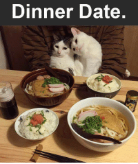 Memes, 🤖, and Page: Dinner Date For more cute pics LIKE us at The Purrfect Feline Page
