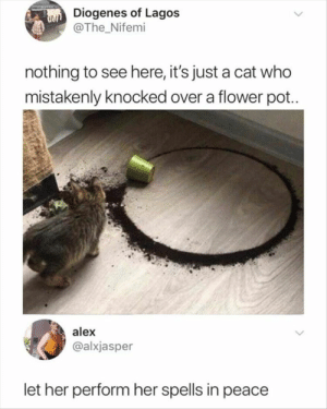 : Diogenes of Lagos  @The Nifemi  nothing to see here, it's just a cat who  mistakenly knocked over a flower pot..  alex  @alxjasper  let her perform her spells in peace