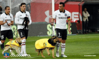 Chilean side, Colo-Colo walked out with shelter dogs as their mascots at the weekend, in order to raise adoption awareness. 🐶👏: DIRECT  14  DIR  EC  1  ES  RECTY  FOTO ALEJANDRA FASSI Chilean side, Colo-Colo walked out with shelter dogs as their mascots at the weekend, in order to raise adoption awareness. 🐶👏