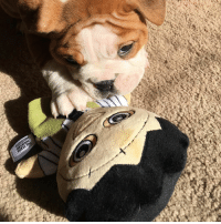 Dirty Randy vs. Leatherface - Who do you think will win? @stinkypete_and_dirtyrandy, thanks for sharing this cuteness! ❤️: Dirty Randy vs. Leatherface - Who do you think will win? @stinkypete_and_dirtyrandy, thanks for sharing this cuteness! ❤️