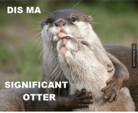 When You Finally Find The One: DIS MA  SIGNIFICANT  OTTER  VIA DAMNLOL.COM When You Finally Find The One