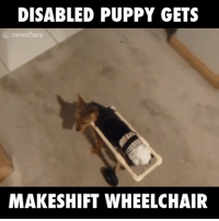 Dank, Finals, and Puppies: DISABLED PUPPY GETS  newsflare  MAKESHIFT WHEELCHAIR This disabled puppy can finally walk with the aid of this wheelchair!