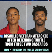 """DAYTONA BEACH, Fla. - Three young men are behind bars after Daytona Beach Police say they injured a disabled veteran and tortured a turtle. They were arrested on Tuesday after allegedly attacking a turtle and then attacking a disabled Navy veteran on Mason Avenue after he attempted to stop them. Garry Blough is the disabled Navy veteran, and his wife was walking their toddler daughter by a pond. She spotted the three males attacking the turtle there. She went back to their apartment and told her husband what was happening. He asked them to leave the turtle alone, but one of the males, identified as Johnnie Beveritt, lifted the turtle above his head and threw it onto the concrete sidewalk. Blough says he asked the guys to leave it alone, then tried helping the turtle back to the water. """"While I had my head turned two of them started hitting me in the back of the head and punching me. Next thing I know we're in a scuffle and I'm fighting three of them at the same time defending myself."""" He says the three men punched him, got him on the ground then kicked him repeatedly. His eye is still purple and severely swollen. Black left anarchists and criminals beating veterans has become commonplace under the Obama administration, and, unfortunately, it will take time to instill respect for those who served our country to spoiled and criminalized youth. Such treatment of American veterans is absolutely unacceptable and I think we should toughen penalties for those who injure, kill or harm those who gave full measure of devotion to their country. veteranscomefirst veterans_us Veterans Usveterans veteransUSA SupportVeterans Politics USA America Patriots Gratitude HonorVets thankvets supportourtroops semperfi USMC USCG USAF Navy Army military godblessourmilitary soldier holdthegovernmentaccountable RememberEveryoneDeployed Usflag StarsandStripes: DISABLED VETERAN ATTACKED  AFTER DEFENDING TURTLE  FROM THESETWO BASTARDS  1LIKE-1PUNCH IN THE FACE OF EACH OF THEM DAYTONA BEACH, Fla. """