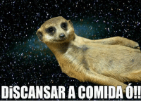 Suricate seboso · Pt-Br (Brazilian Portuguese) and International   DiSCANSARACOMIDAO! 5ce1610956