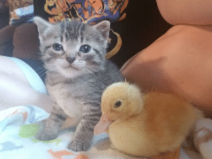 Disgruntled kitten doesnt want to share the awws: Disgruntled kitten doesnt want to share the awws