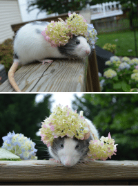Head, Run, and Target: disgustinganimals:  karasratworld:  Remi tried to run underneath the flowers and they got stuck on her head. She was not amused.   actions have consequences, Remi.