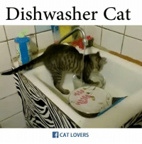 Memes, 🤖, and Cat: Dishwasher Cat  CAT LOVERS