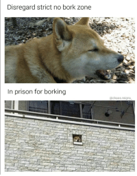 Borked: Disregard strict no bork zone  In prison for borking  @chaos.reigns