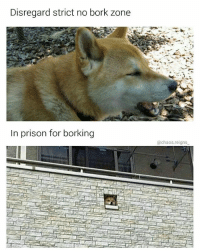 free doge 📣 thx for following @chaos.reigns_: Disregard strict no bork zone  In prison for borking  @chaos.reigns free doge 📣 thx for following @chaos.reigns_