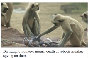 gudbud: me when my favorite russian psyop blog gets deleted: Distraught monkeys mourn death of robotic monkey  spying on them gudbud: me when my favorite russian psyop blog gets deleted