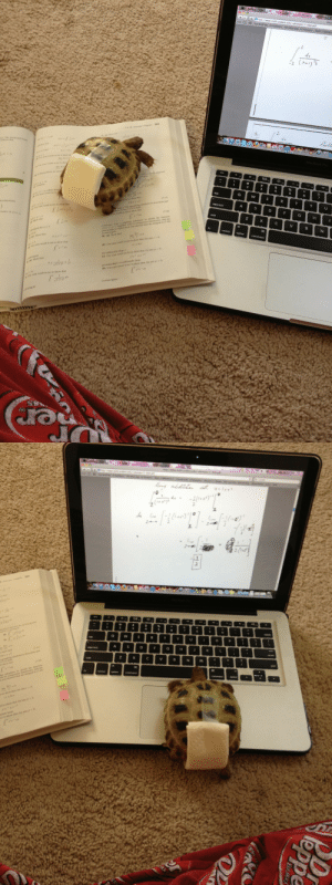 butchinthesouth:  versatilequeen:  moriiahh:  Harold likes to help me with my homework. And yes that is a diaper we made to make sure he doesn't pee everywhere when we let him roam the house..don't judge.  TORTOISE IN A DIAPER.  Omg. Morning made. : dit Vievw  History Bookmark  http:/www.math ucdavis.edu/-ykemper/7-4Sol pdf  Fun Stuff Mu  2  3  how th  6  caps lock  A.  skeich the function  the integral  your graph to explain how you showed that  Show th  Show that  controloption  o show that  se your ressl  show that. for any  )  Use your result in  ergent  Show thar  show that, for any  (e) Use your  show that, for any  Use your result i  Use your result   2  ng calculator to sketch the functhoe  ently large butchinthesouth:  versatilequeen:  moriiahh:  Harold likes to help me with my homework. And yes that is a diaper we made to make sure he doesn't pee everywhere when we let him roam the house..don't judge.  TORTOISE IN A DIAPER.  Omg. Morning made.