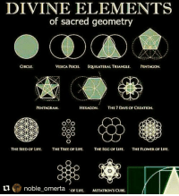 Repost @noble_omerta with @repostapp ・・・ 👁👌: DIVINE ELEMENTS  of sacred geometry  CIRCLE.  VESICA PISCIS. FOUILATERAL TRIANGLE  PENTAGON  HEXAGON  THE 7 DAYS OF CREATION  PENTAGRAM.  OAO  OXO  THE SEED OF LIFE.  THE TREE OF LIFE  THE EGG OF LIFE  THE FLOWER OF LIFE  ti noble omerta  OF LIFE.  METATRON'S CUBE. Repost @noble_omerta with @repostapp ・・・ 👁👌