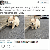 """Cute, Dad, and Memes: DK  @DKisfake  . Follow  Literally flipped a u-turn on my bike ride home  because of this cloud on a leash. His dad told  me his name, Bok Choy  RETWEETS LIKES  24,213 43,066  謝賦冱阿菡""""MIA鬱叉, it's so cute 😋 (qotd: do you have any pets? 🦈)"""