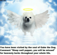 "Memes, 🤖, and Bork: @DMandWM  You have been visited by the soul of Gabe the Dog.  Comment ""Sleep well pupper, you will be missed""  for heavenly borks throughout your whole life Sleep well pupper, you will be missed."