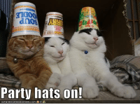 Now it's a real party!: dnOS  Party hats on!  LCANHASCHEEZEURGER.COM Now it's a real party!