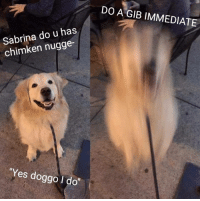 "DRILL MODE ACTIVATED: DO A GIB IMMEDIATE  Sabrina do u has  chimken nugge-  Yes doggo I do"" DRILL MODE ACTIVATED"