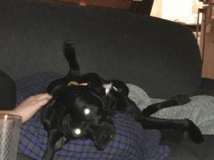 Do I give belly rubs or call the exorcist?: Do I give belly rubs or call the exorcist?