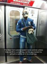 Memes, Subway, and 🤖: Do motinanon door  The New York subway system bans canines unless  they can fit in a small bag, so this guy trained his  pit bull to calmly sit in his small bag THIS IS AWESOME