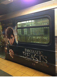 """Cars, Subway, and Tumblr: Do  NEWT SCAMANDER  MAGIZOOLOGIST  FANTASTIC  TO FIND THEM  1118 <p><a href=""""http://daily-harrypotter-world.tumblr.com/post/153106895969/all-of-the-cars-of-this-nyc-subway-train-are"""" class=""""tumblr_blog"""">daily-harrypotter-world</a>:</p>  <blockquote><p>All of the cars of this NYC subway train are covered in Fantastic Beasts advertising, including the seats and doors!</p></blockquote>"""