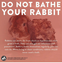 "Cats, Facebook, and Life: DO NOT BATHE  YOUR RABBIT  Rabbits can easily die from shock or hypothermia when  given a bath. They can also get ear infections and  pneumonia. Rabbits bathe themselves regularly, just like  cats do. When living in clean conditions, rabbits should  never need a bath.  A MESSAGE FROM SPOOKY AND SCULLY  FACEBOOK.COM/SPOOKYANDSCULLY <p><a href=""http://littletrickypixie.tumblr.com/post/150088884336/gossamerglitch-shelbydoesnotpwn"" class=""tumblr_blog"">littletrickypixie</a>:</p>  <blockquote><p><a class=""tumblr_blog"" href=""http://gossamerglitch.tumblr.com/post/84303973126"">gossamerglitch</a>:</p> <blockquote> <p><a class=""tumblr_blog"" href=""http://shelbydoesnotpwn.tumblr.com/post/76077138272"">shelbydoesnotpwn</a>:</p> <blockquote> <p><a class=""tumblr_blog"" href=""http://amazingatheist.tumblr.com/post/76074948129"">amazingatheist</a>:</p> <blockquote> <p><a class=""tumblr_blog"" href=""http://maitaijulie.tumblr.com/post/76048453663"">maitaijulie</a>:</p> <blockquote> <p><a class=""tumblr_blog"" href=""http://aviculor.tumblr.com/post/73732651176"">aviculor</a>:</p> <blockquote> <p>important psa about buns</p> </blockquote> <p>We raised rabbits when I was a child and my sister gave a rabbit a bath (she was 5) and it died..so heed this instruction.</p> </blockquote> <p>I wasn't going to reblog this, but then I realized I might save a rabbit.</p> </blockquote> <p>This is important guys. If your rabbit gets into something gnarly and you HAVE to bathe them:<br/>1. Fill a bowl with warm water.<br/>2. Get a washcloth. Put it in the water. Squeeze it out until it is just damn. <br/>3. Lightly scrub the dirty area on your bun.<br/>4. That is it. DO NOT get your bun wet. Only slightly damp on the part that was dirty. <br/>(<a href=""http://www.wikihow.com/Bathe-Your-Pet-Rabbit"">source</a>)</p> </blockquote> <p>VERY IMPORTANT! SAVE A BUNS LIFE!</p> </blockquote>  <p>Save the buns!</p></blockquote>"