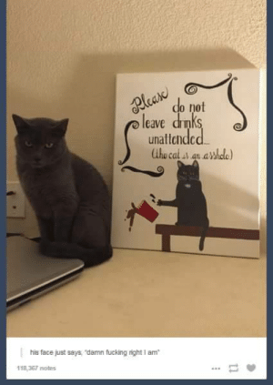 Fucking, Omg, and Tumblr: do not  eave drnk  unattcndcd  his face just says, damn fucking right I am  118,367 otes THE Asshole Catomg-humor.tumblr.com