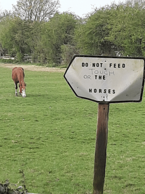 Do not feed touch or the horses: Do not feed touch or the horses