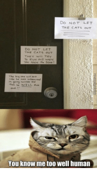 Memes, 🤖, and The Doors: Do NOT LET  THE CATS OUT  DO NOT LET  THE CATS OUT  THEY will TRY  To RUN OUT WHEN  You OPEN the DOOR!  The big one will act  he ierit inteverved  going eur cide and  then he WILL RUN  You know me too well human Cat owners will know the struggle.
