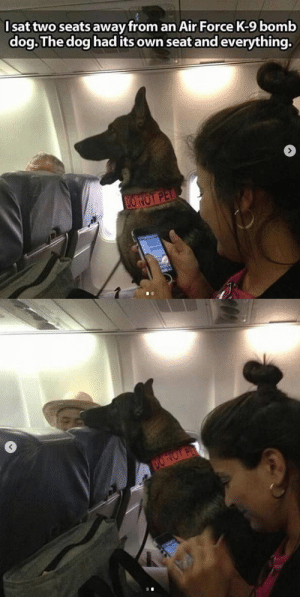 Do not pet😭All dogs should have their own personal seats: Do not pet😭All dogs should have their own personal seats